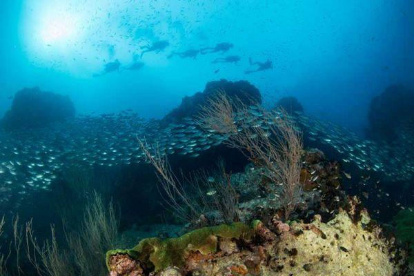 Scuba diving speciality courses on Koh Tao